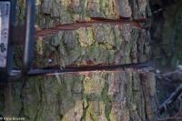 Holzdiebe 12.01.2013 Bild 3